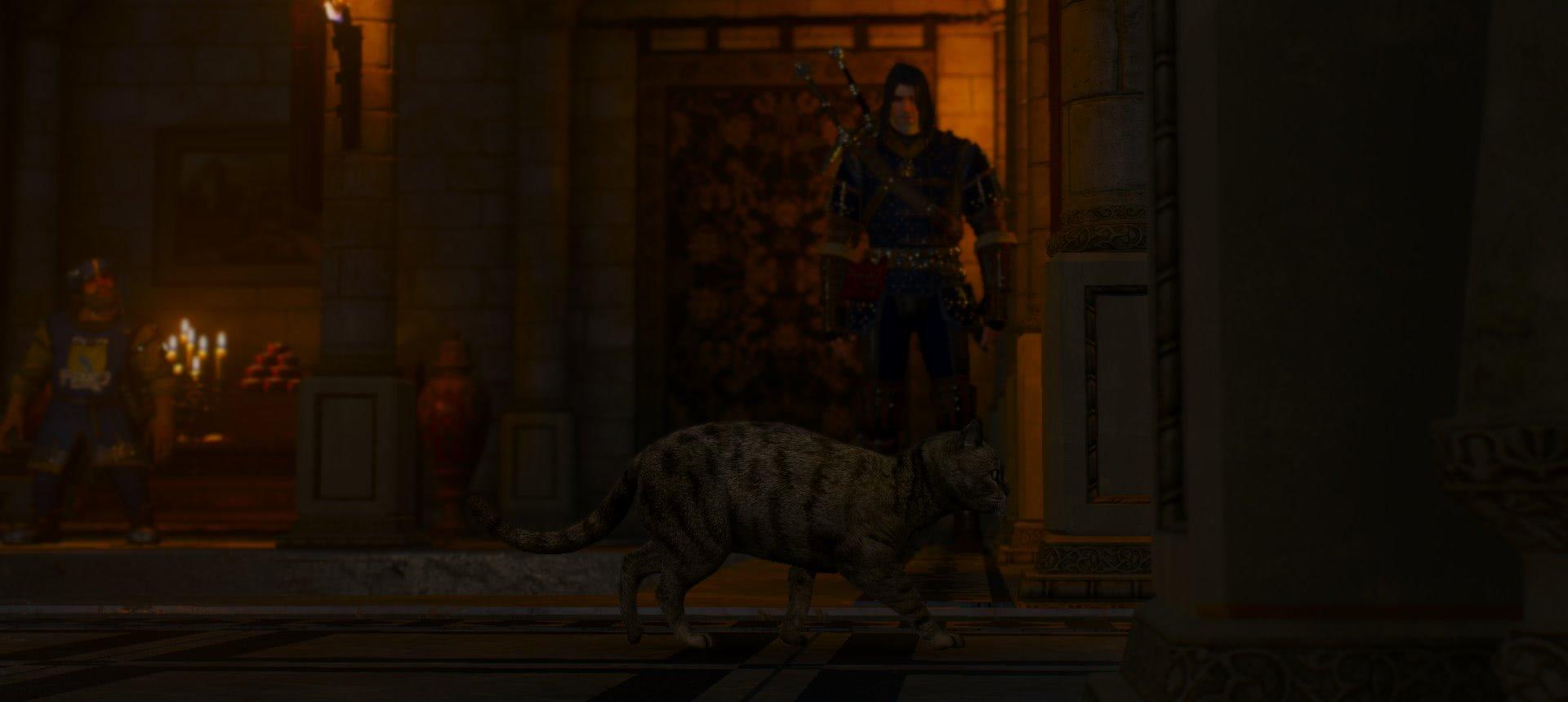 witcher3 Клиент всегда прав кошка